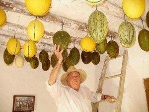 melones-de-invierno-en-lopera24